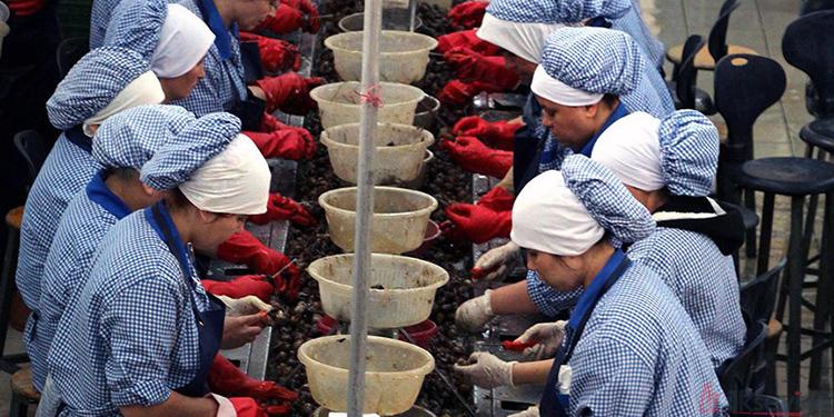Ayanoğlu Salyangoz Fabrikası