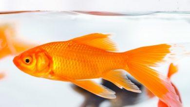 Soğuk Suda Hangi Balık Türleri Yaşar?